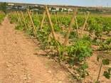 Столбики круглые виноградные, шпалеры для сада - фото 1