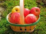 Cestini per la frutta - фото 3