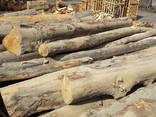 Дрова / Firewood / Brennholz - photo 8