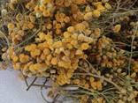 Лекарственные растения (сырье) - фото 1