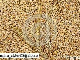 Продам Ячмень и Пшеницу и Кукуруза - фото 1