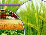 Produttore e fornitore di pesticidi in tutto il mondo - фото 1