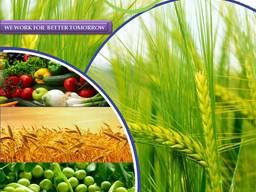 Produttore e fornitore di pesticidi in tutto il mondo