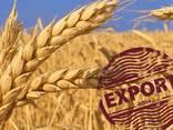 Пшеница мягкая, пшеница твердая - photo 1