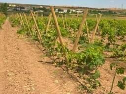 Столбики круглые для виноградника, шпалеры для сада