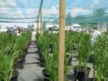 Теневая сетка - защита от непогоды для агроплощадок - photo 6